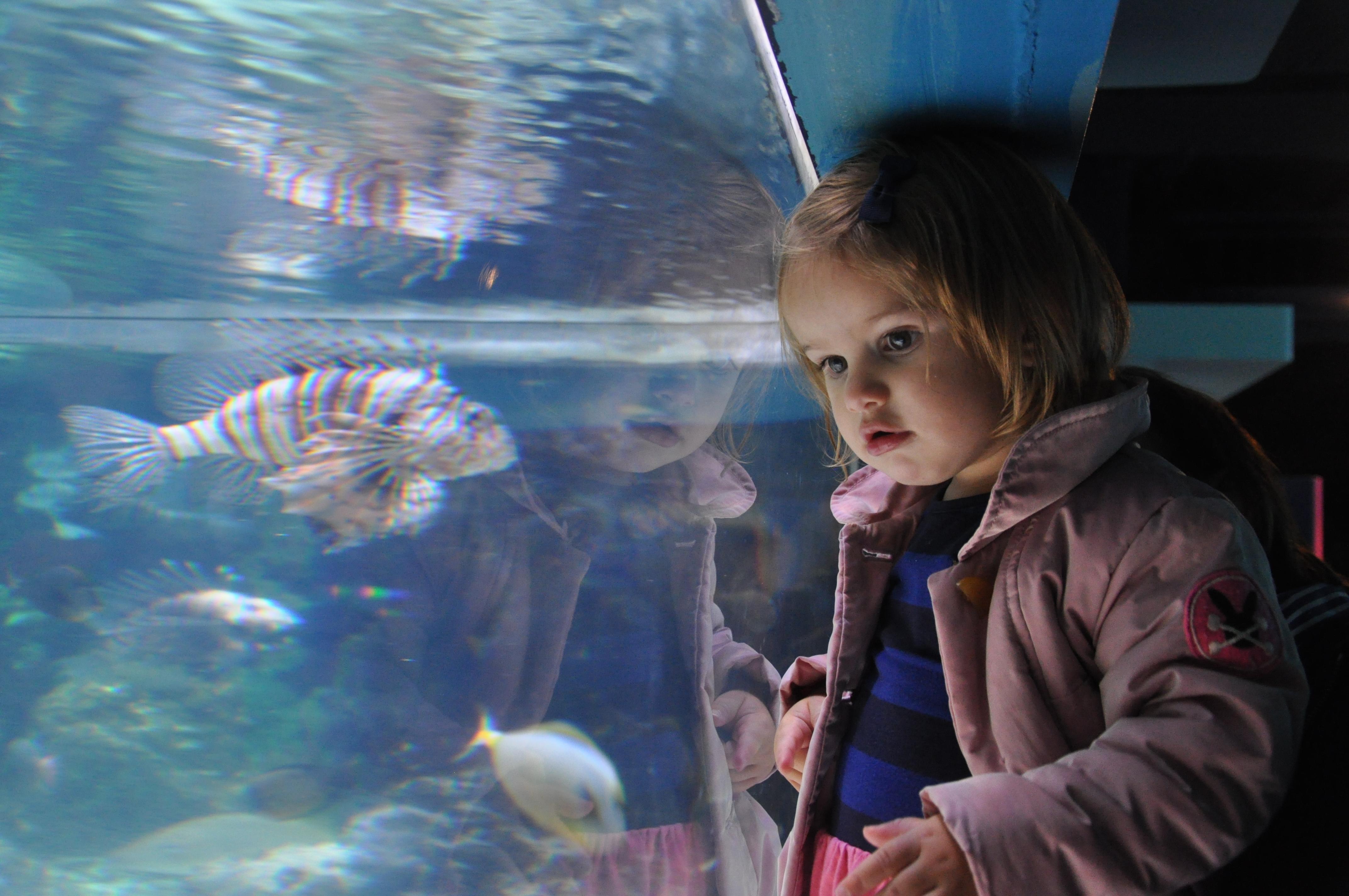 London-Aquarium