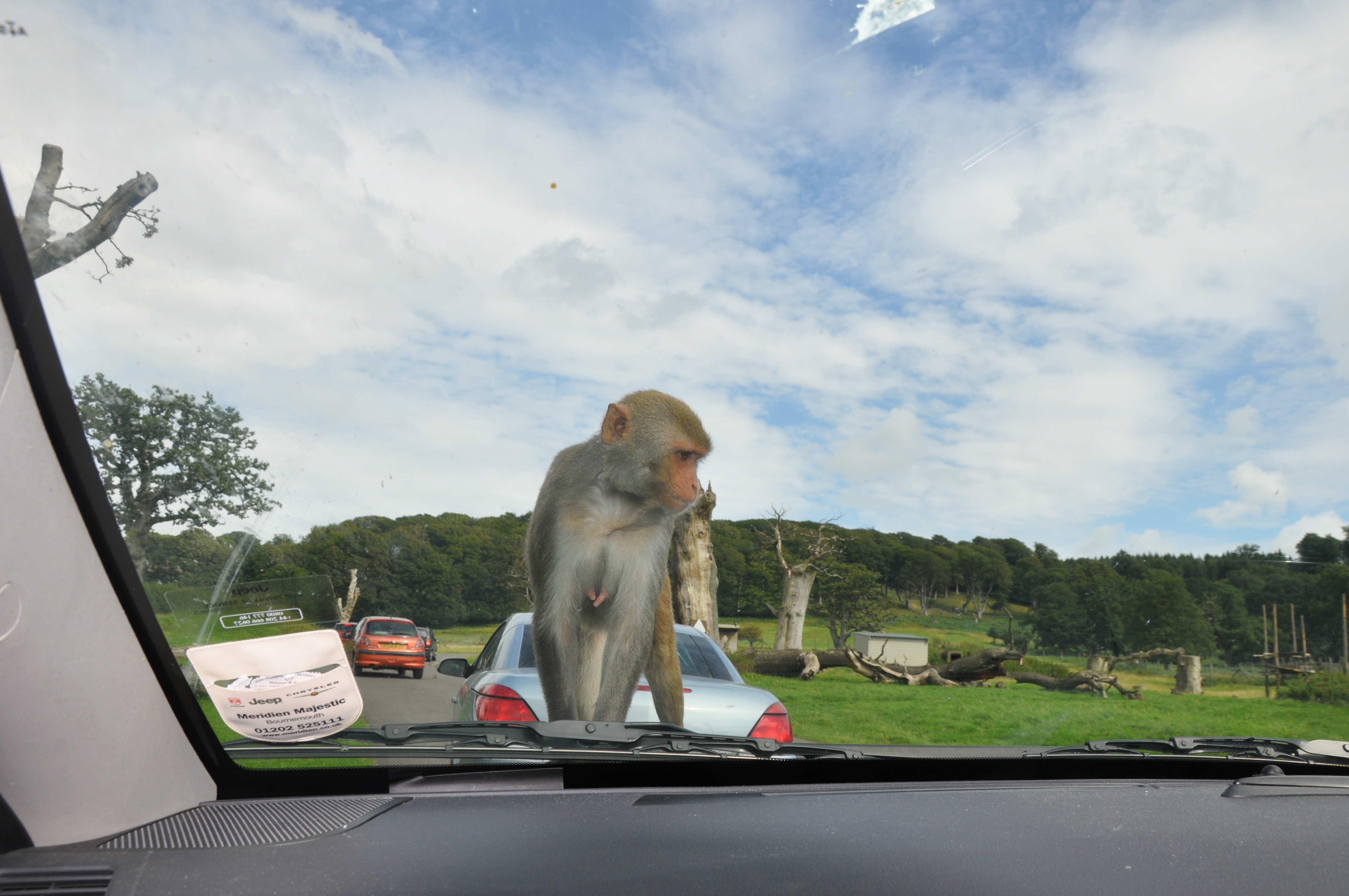 Monkey-Longleat