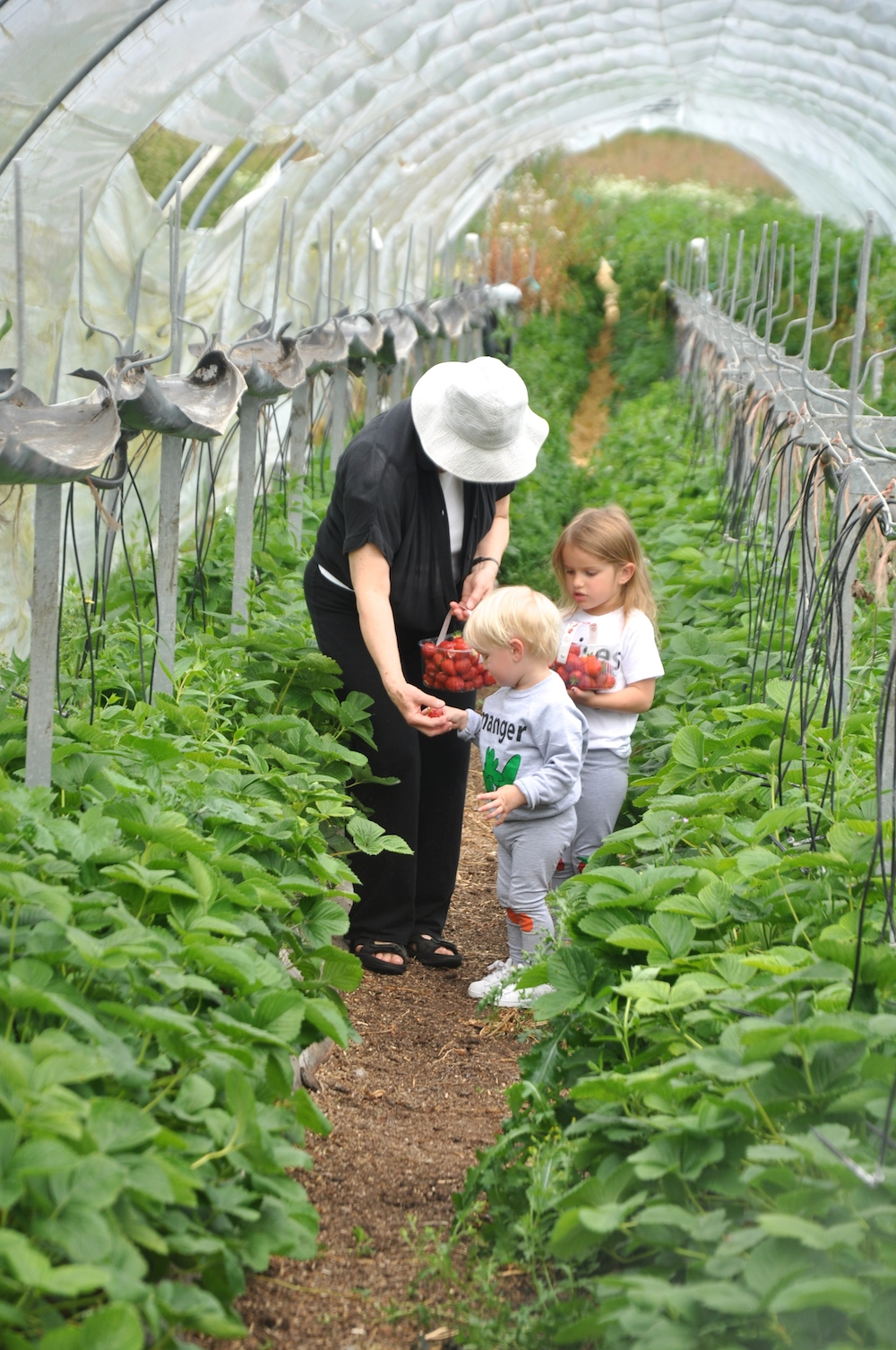 Granny_strawberry_picking