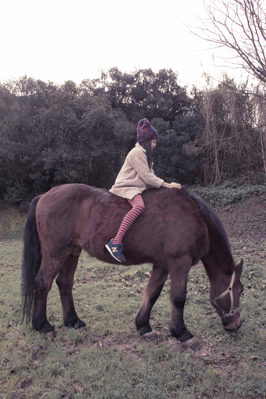 bobo_choses_aw15_horses
