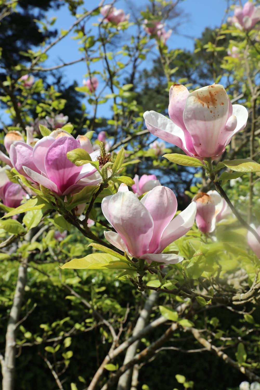 Chloeuberkid_flowers