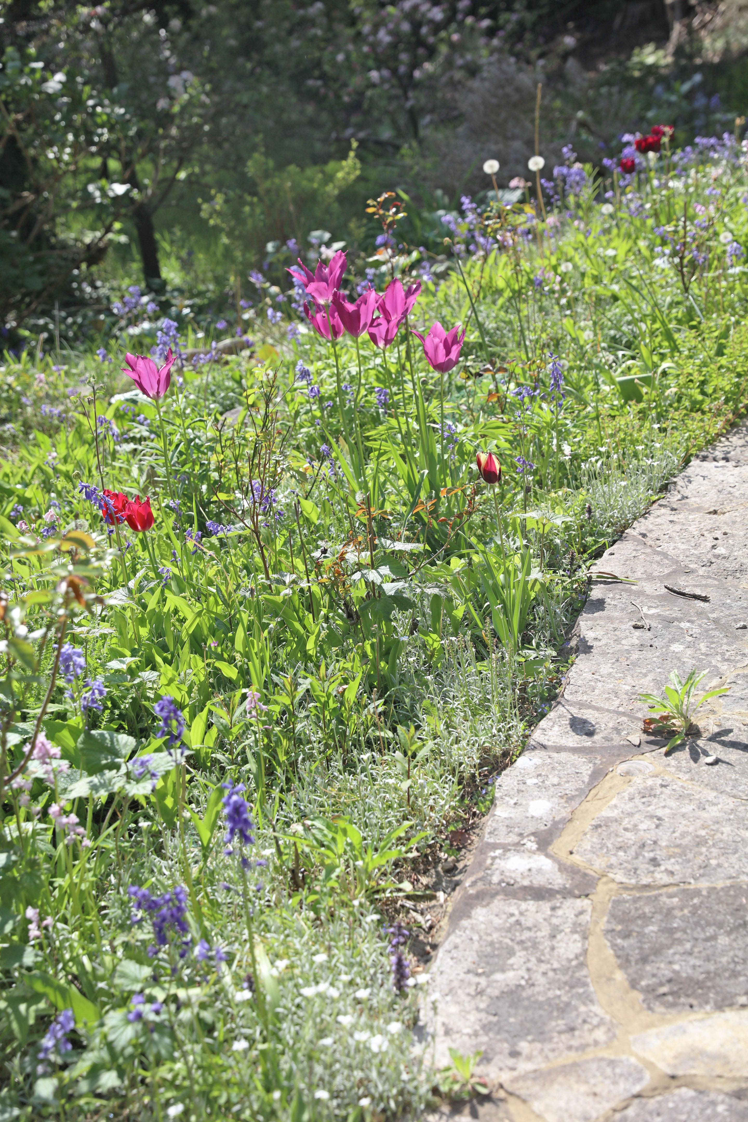 flowers_garden